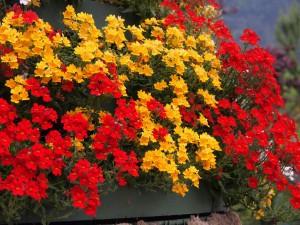Color español en Merano
