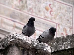 Pareja de Tórtolos Piazza Duomo Trento