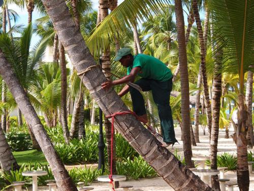 A por cocos