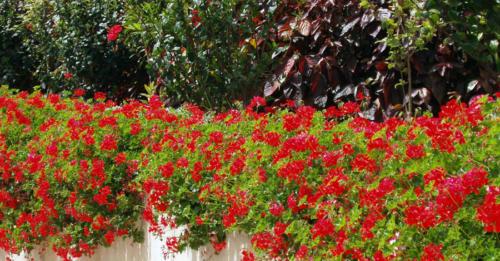 Salpicón en rojo