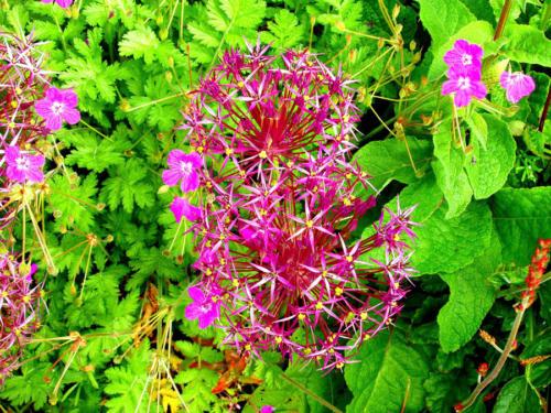 Explosión floral
