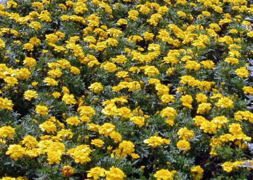 Jardín en amarillo 2