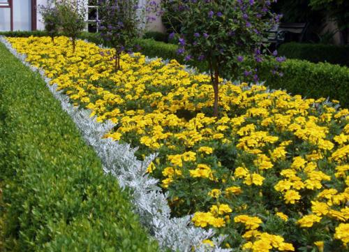 Jardín en amarillo