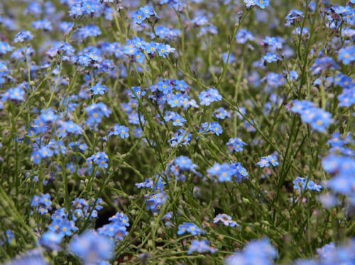 Primavera azul