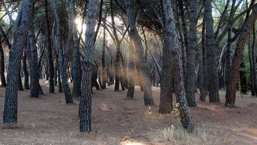 Descubriendo el polvo del bosque