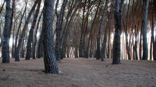 Detrás del árbol