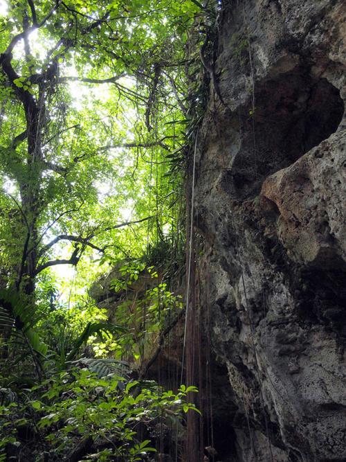 Cascada de lianas