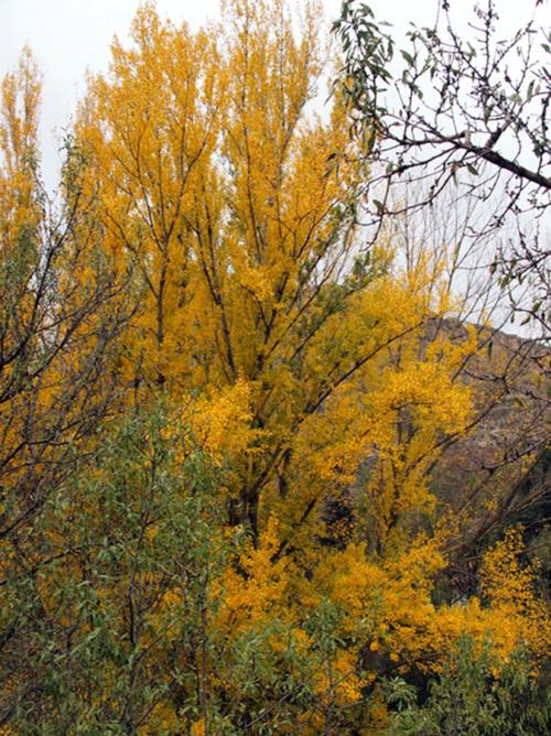 Amarillo otoñal
