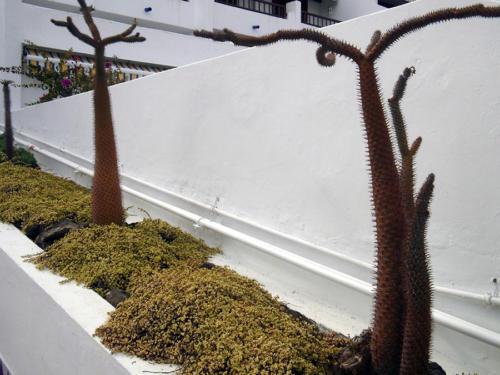 Cactus en línea