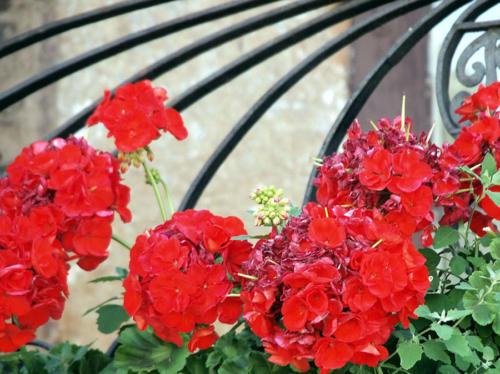 Flores en balcón