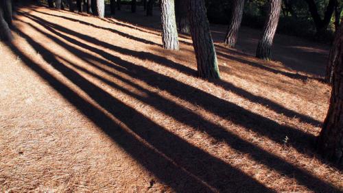 Carriles de sombra