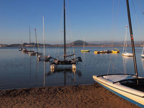 Catamaranes en línea